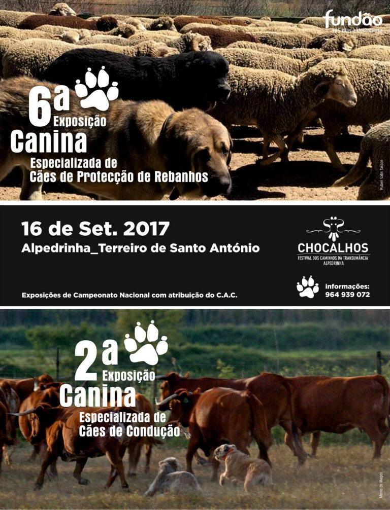 Exposição Canina Especializada de Cães de Proteção, Chocalhos 2017
