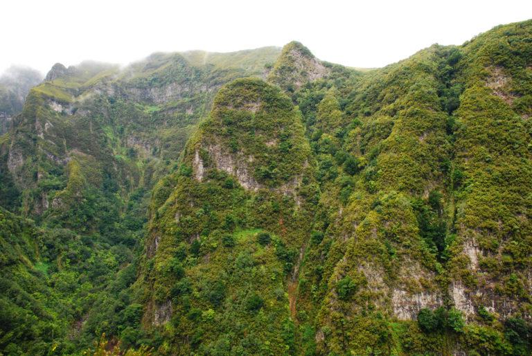 Vegetação característica da Madeira - Foto de Andrei Dimofte